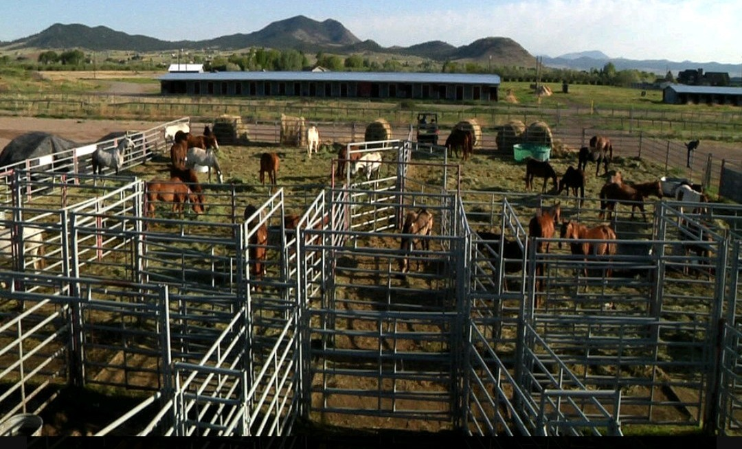 Is Horse Theft By Government Legal In Helena Montana